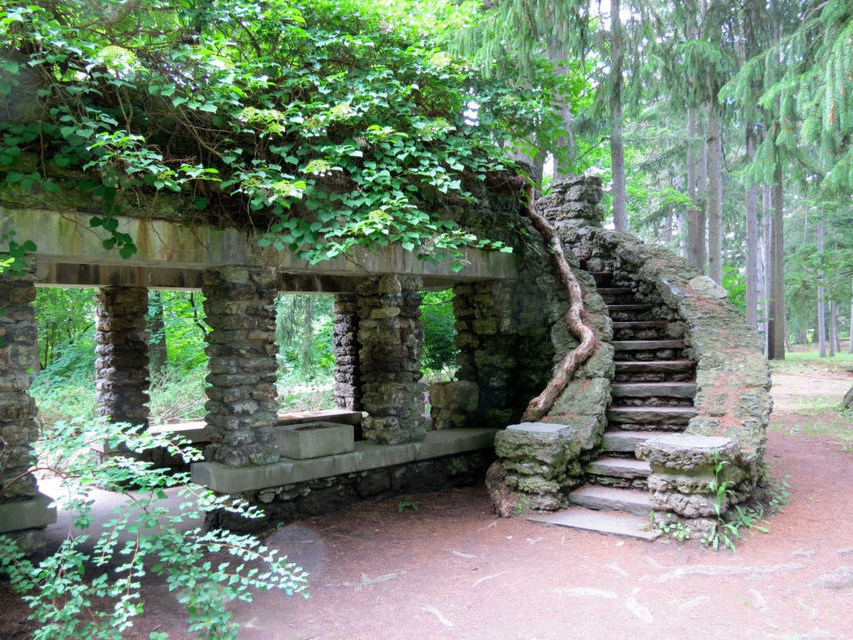 Stone steps surrounded by greenery